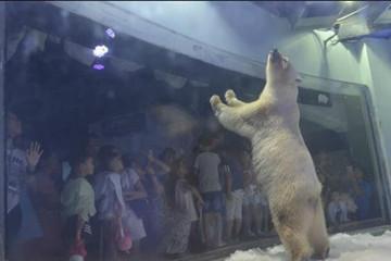 """广州酷暑难耐 """"最悲伤北极熊""""商场""""接客"""""""