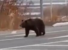 """黑龙江一保护区两熊一虎仍""""在逃""""?保护区回应"""