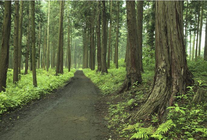 国家林草局允许部分土地发展生态观光旅游