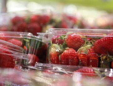 综述:澳水果藏针风波持续发酵 政府多措并举挽救草莓产业