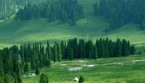 国家林业和草原局:全国已有17个省份开展林长制改革试点