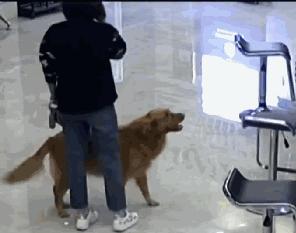 狗狗叼到一部手机,竟然救下一条人命!
