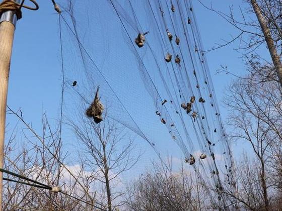 吉林森林公安破获特大非法狩猎案 解救大量鸟类