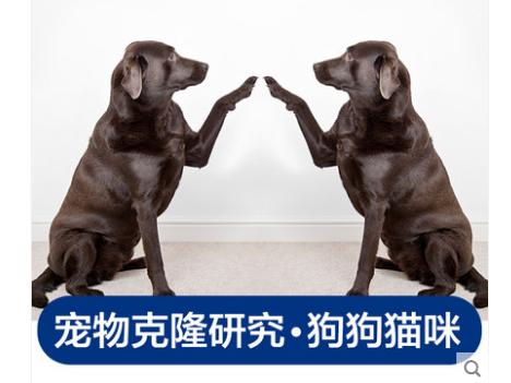 38万元克隆宠物狗?专家认为没必要:不能延续记忆