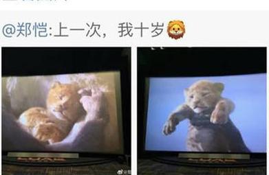 郑恺屏摄影片《狮子王》引争议 网友呼吁文明观影