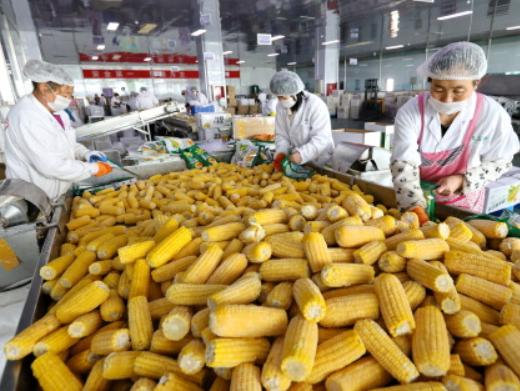 中储粮湖北分公司投放国家一次性储备玉米7万余吨保市场供应